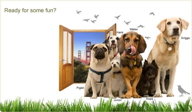 Dogwalks - San Francisco Dog walking Service